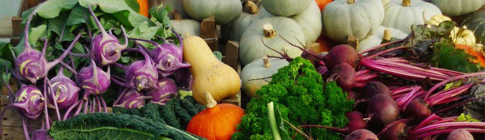 野新規就農希望者のための農業体験・研修