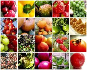 環境保全型農業2